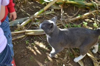The creepy corn maze cat that stalked us...no pun intended!